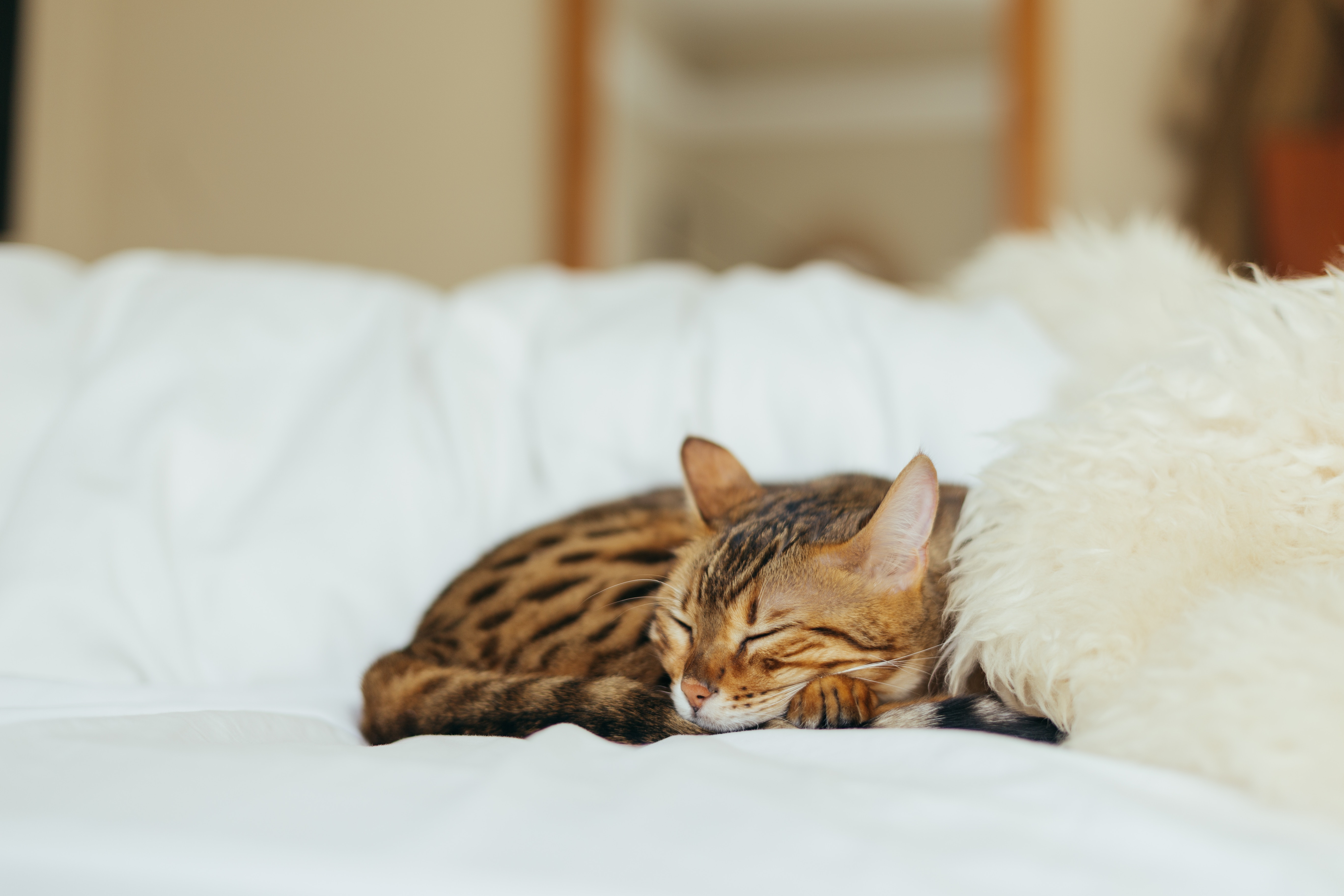 Slaapplekken vol
